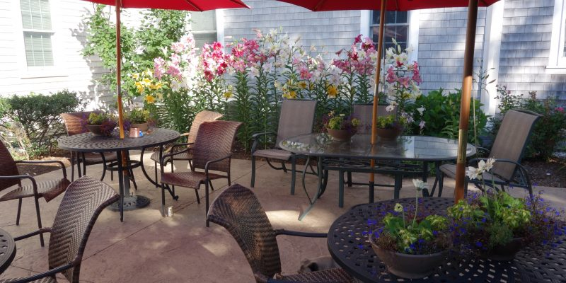 patio in bloom